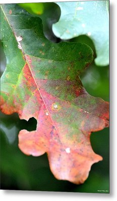 Natural Oak Leaf Abstract Metal Print by Maria Urso