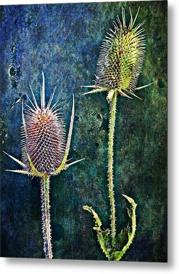 Nature Abstract 12 Metal Print by Maria Huntley