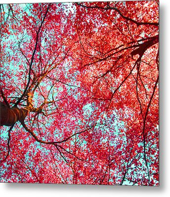 Metal Print featuring the photograph Abstract Red Blue Nature Photography by Artecco Fine Art Photography