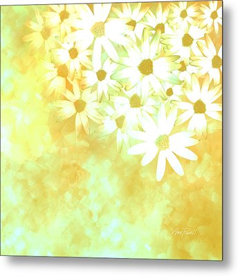 nature - flowers- White Daisies -floral art Metal Print