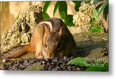 Nature Gone Wild-chipmunk Metal Print by Brittany Perez