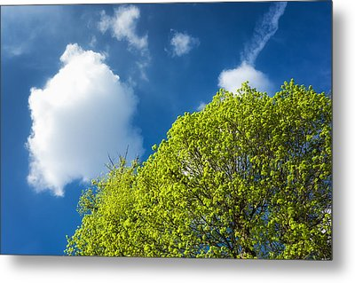 Nature In Spring - Bright Green Tree And Blue Sky Metal Print by Matthias Hauser