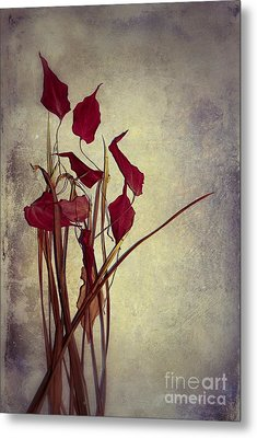 Nature Morte Du Moment  01 - Pr03 Metal Print by Variance Collections