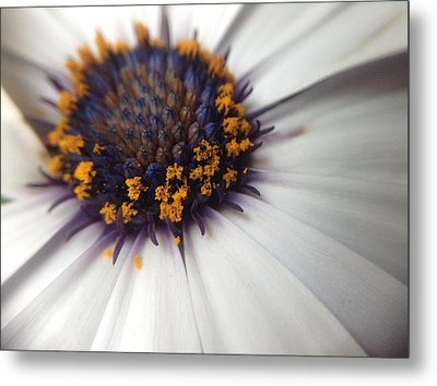 Metal Print featuring the photograph Nature Photography 11 by Gabriella Weninger - David