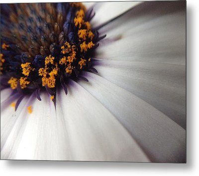Metal Print featuring the photograph Nature Photography 5 by Gabriella Weninger - David