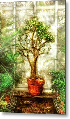 Nature - Plant - Tree Of Life  Metal Print by Mike Savad