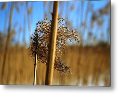 Nature Series 1.1 Metal Print