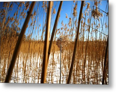 Nature Series 1.2 Metal Print