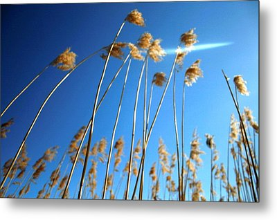 Nature Series 1.3 Metal Print by Derya  Aktas