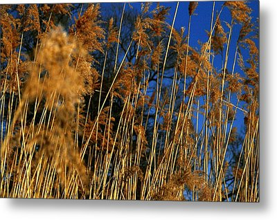 Nature Series 1.4 Metal Print