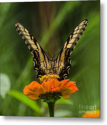Nature Stain Glass Metal Print by Donna Brown