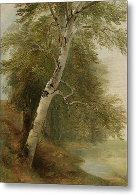 Nature Study   A Birch Tree Metal Print by Asher Brown Durand