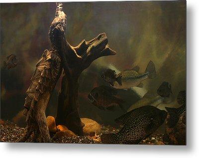 Nature Under Water Metal Print by Linda Fowler