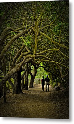 Nature Walk Metal Print by Joseph Hollingsworth