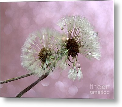 Nature Wish Metal Print by Krissy Katsimbras