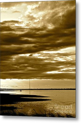 Nature Witnesses Metal Print by Q's House of Art ArtandFinePhotography
