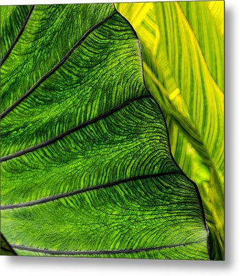 Nature's Artistry Metal Print by Jordan Blackstone