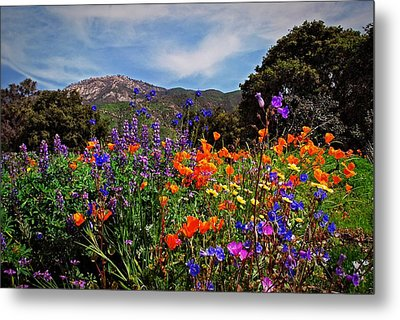 Metal Print featuring the photograph Nature's Bouquet  by Lynn Bauer