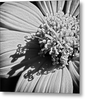 Nature's Detail Metal Print by Dawn Currie
