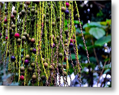 Metal Print featuring the photograph Nature's Dreadlocks by Zafer Gurel