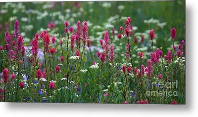Nature's Front Row Metal Print