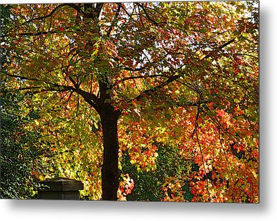 Nature's Goddess Metal Print by Jocelyne Choquette