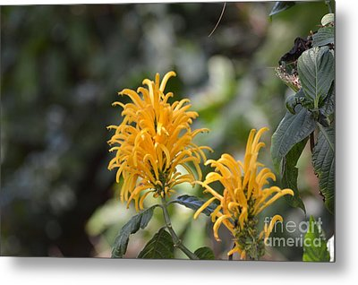 Nature's Golden Fireworks Metal Print
