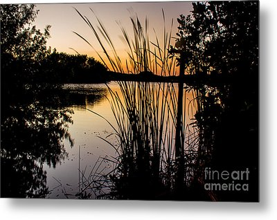 Natures Hidden Beauty Metal Print by Rene Triay Photography