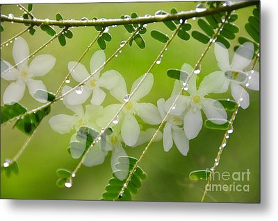 Metal Print featuring the photograph Nature's Jewelry by Darla Wood