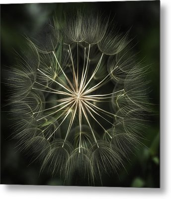 Metal Print featuring the photograph Nature's Kaleidoscope  by Kristal Kraft
