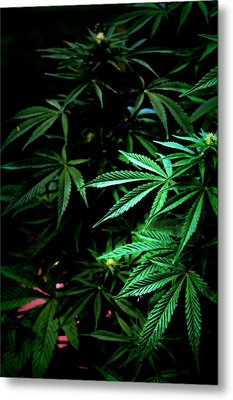 Metal Print featuring the photograph Nature's Medicine by Jeanette C Landstrom