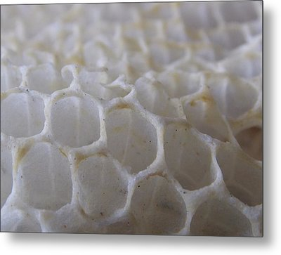 Natures Network Metal Print by John Glass