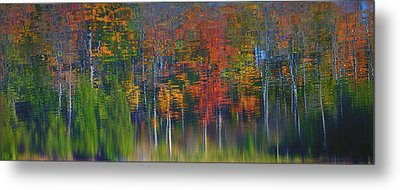 Nature's Paint Brush Metal Print by Gary Hall
