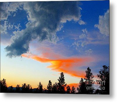 Nature's Palette Metal Print by Barbara Chichester