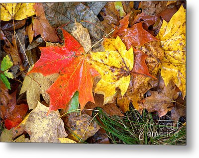 Metal Print featuring the photograph Nature's Palette by Jim McCain