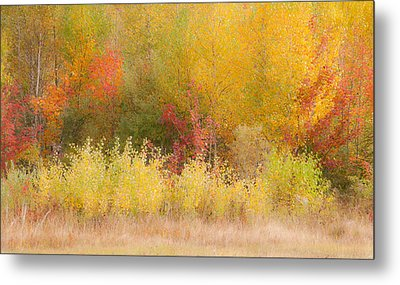 Metal Print featuring the photograph Nature's Palette by Paul Miller