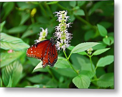 Natures Perfection Metal Print by Aimee L Maher Photography and Art Visit ALMGallerydotcom