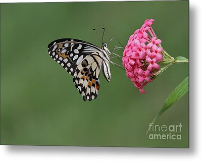 Natures Perfections Metal Print by Gary Bridger