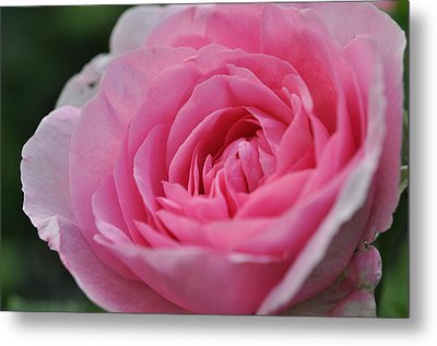 Metal Print featuring the photograph Nature's Pink by Sabine Edrissi