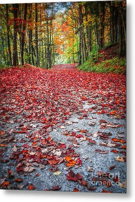 Nature's Red Carpet Metal Print by Edward Fielding