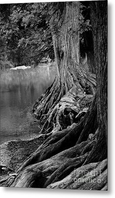 Natures Roots Metal Print by Gayle Johnson
