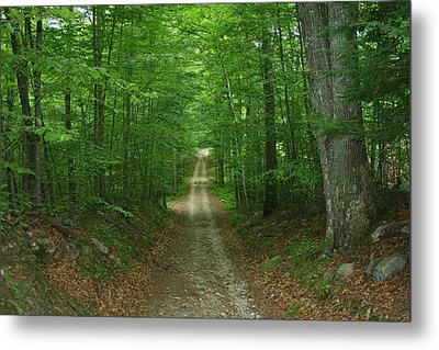 Metal Print featuring the photograph Nature's Way At James L. Goodwin State Forest  by Neal Eslinger