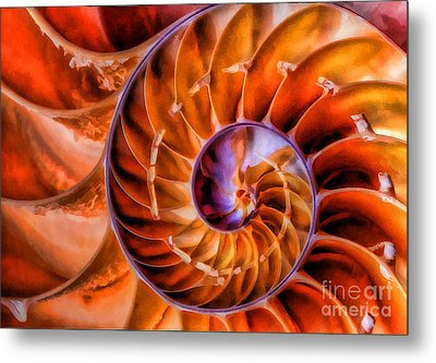 Metal Print featuring the photograph Nautilus by Clare VanderVeen