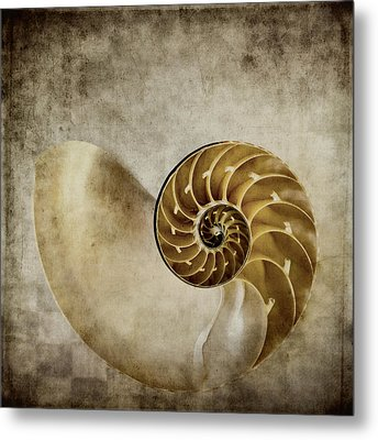 Nautilus Shell Metal Print by Carol Leigh