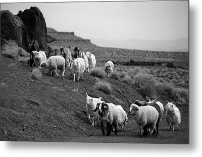 Navajo Sheep Metal Print