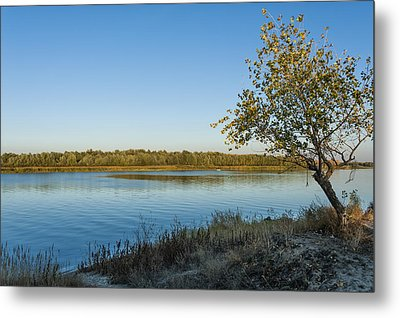 Near River Metal Print by Svetlana Sewell