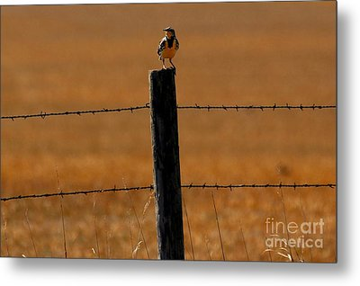 Nebraska's Bird Metal Print by Elizabeth Winter