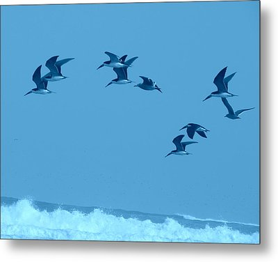 Neon Flight Metal Print by Lew Davis