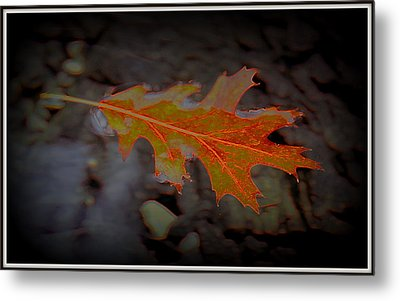 Neon Leaf Afloat Metal Print by Greg Thiemeyer