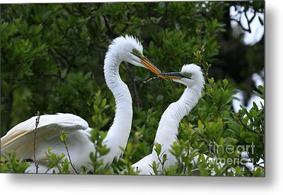Metal Print featuring the photograph Nest Building by John F Tsumas